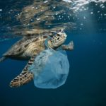 Thousands of Tonnes of Ocean Microplastics Could be Blowing Ashore Every Year with Sea Breeze, Study Finds