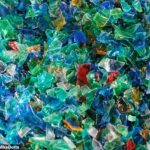 Microplastics Now Being Found in Human Organs