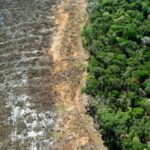 Climate Change: New UK Law to Curb Deforestation in Supply Chains