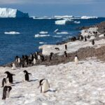 Climate Crisis: 5,000-year-old Penguin Graveyard Revealed By Retreating Antarctic Ice