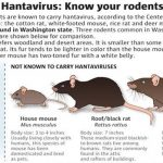 After Coronavirus, Now Hantavirus Takes Twitter By Storm