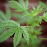 Scythian Biosciences Corp. moving into Florida medical marijuana market