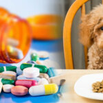 Global Animal Health Active Pharmaceutical Ingredients Market Analysis (USD Billion) Insights and Forecast 2016-2027