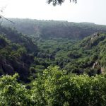 World Environment Day: Despite increasing green cover, India is losing its forests